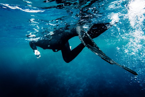 How to get started with spearfishing
