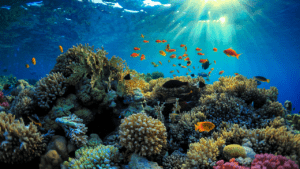 What Are the Most Beautiful Coral Reefs in the World