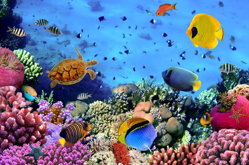 What is the best and most cost effective place in the world to learn scuba diving?