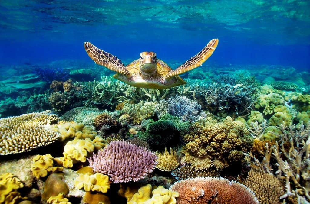 What Are the Most Beautiful Coral Reefs in the World?