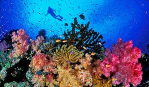 Diving at the Maldives, Lakshadweep, Indian Ocean