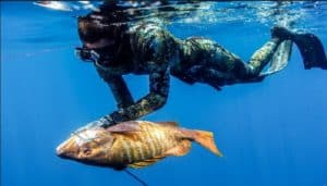 Spearfishing in the Ocean