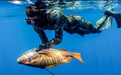 Is a Spearfishing License Required in the U.S?