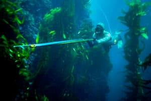 spearfishing in California