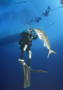 spearfishing in Florida